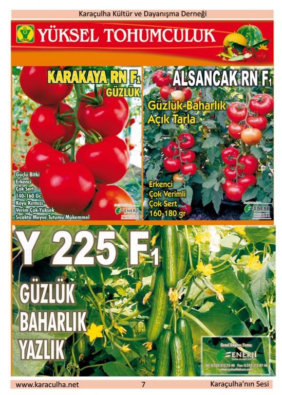 sayfa7